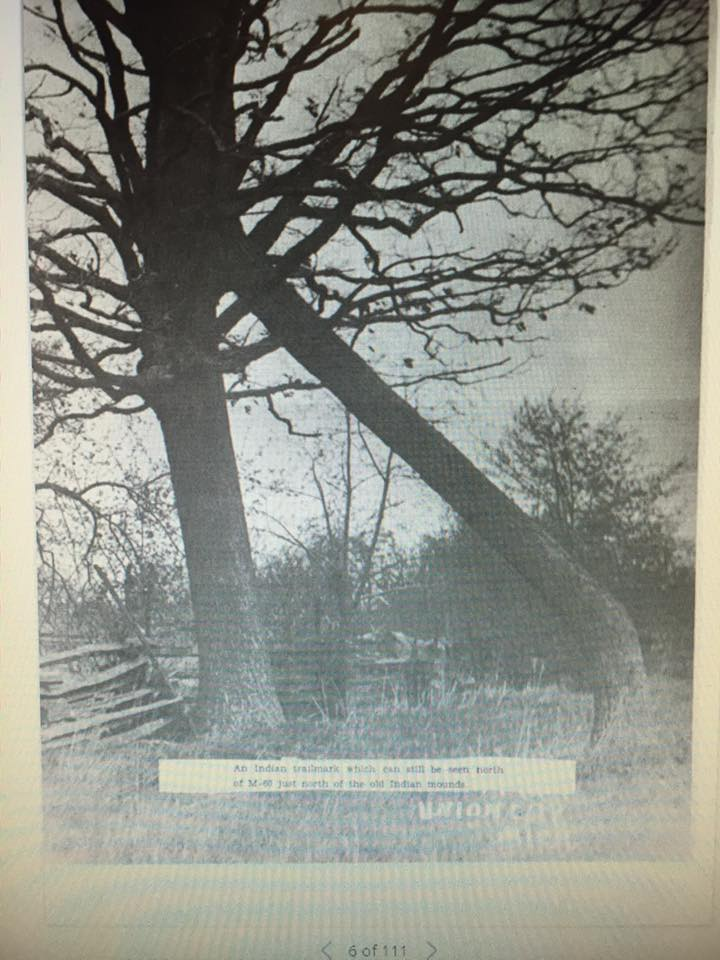 Indian marker tree
